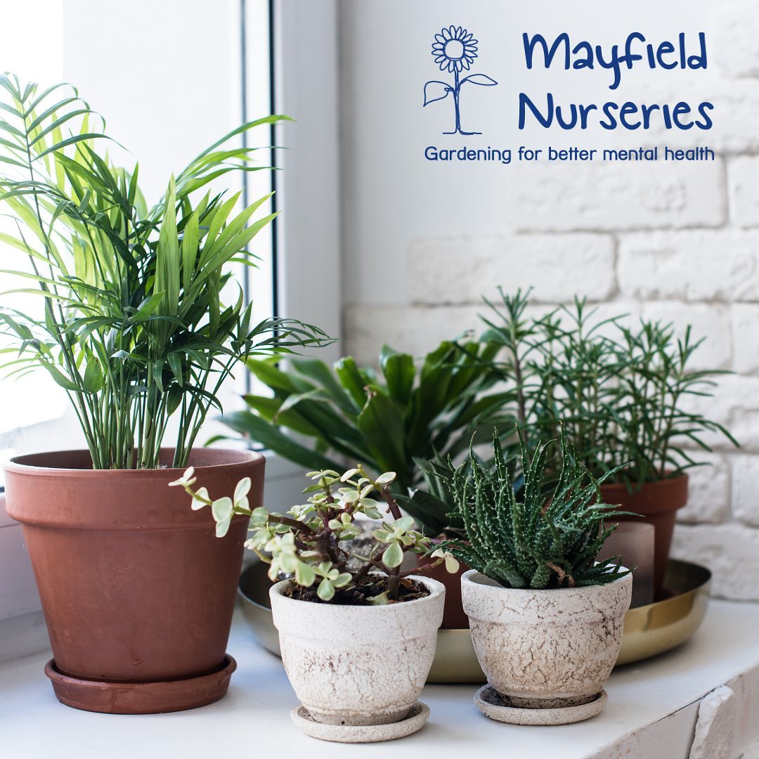 mayfieldnurseries